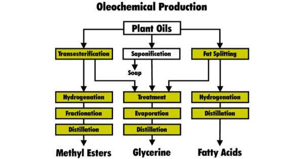 Oleochemistry – a Study of Vegetable Oils and Animal Oils