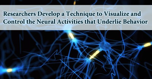 Researchers Develop a Technique to Visualize and Control the Neural Activities that Underlie Behavior