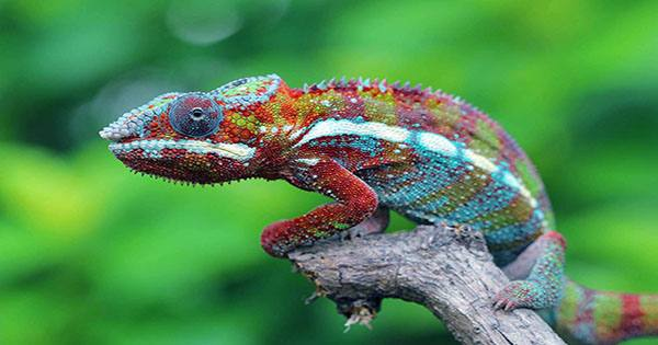 Robot Chameleon that Actively Camouflages itself into Surroundings Created by Scientists