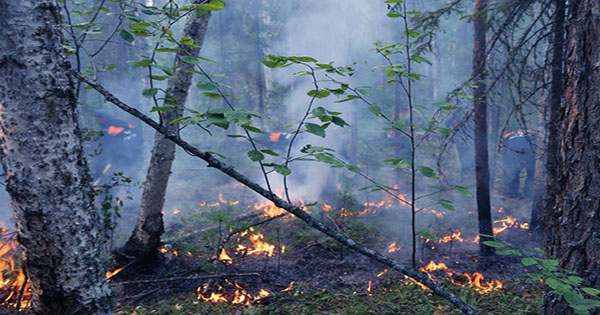 Siberia's Wildfires are Bigger than all the Others Raging Right Now Combined