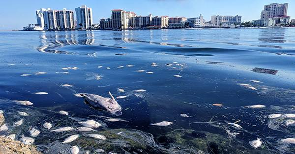"""Slurry of Clay Used to Fight Against Florida's Deathly """"Red Tide"""""""