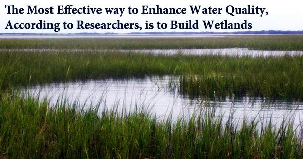 The Most Effective way to Enhance Water Quality, According to Researchers, is to Build Wetlands
