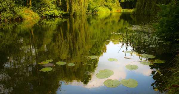 The Recovery of Agricultural Ponds can Support to Save Our Pollinators