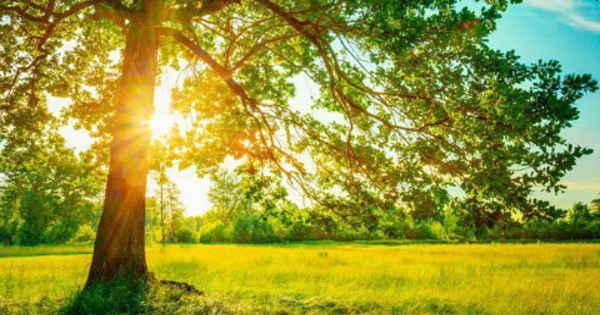 The Summer in Bangladesh