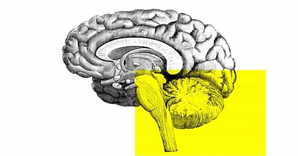 A Region of Brain Stem may Mediate Religiosity and Spirituality in Humans