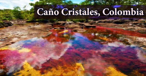 Caño Cristales (the River of Five Colors), Colombia
