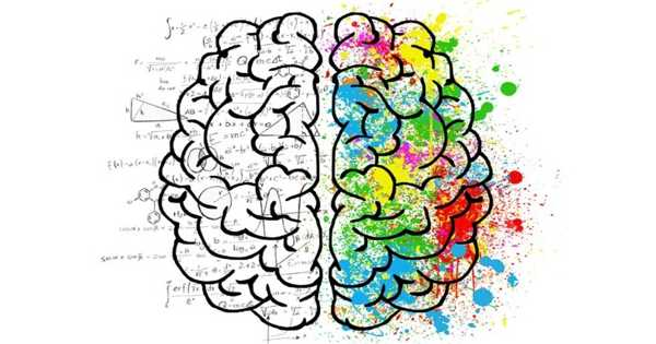 New Investigations Identify Gene Targets in Brain Stress Hormones
