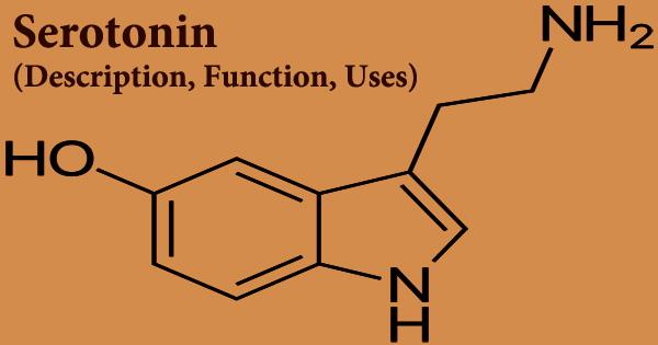 Serotonin (Description, Function, Uses)