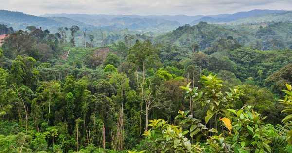 Spring Rain Falls Naturally in the Congo Rainforest