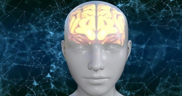 The Motor Cortex of the Brain can Help Vocabulary Learning