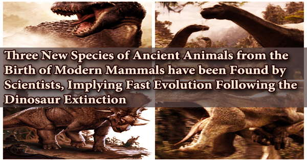 Three New Species of Ancient Animals from the Birth of Modern Mammals have been Found by Scientists, Implying Fast Evolution Following the Dinosaur Extinction