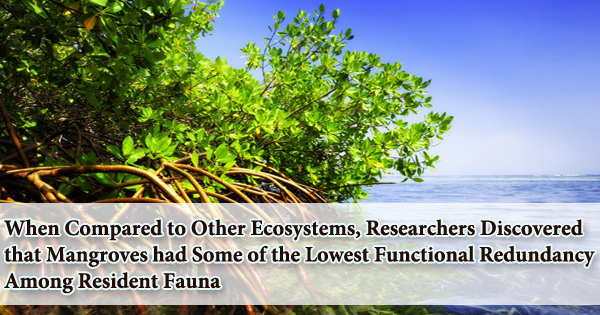 When Compared to Other Ecosystems, Researchers Discovered that Mangroves had Some of the Lowest Functional Redundancy Among Resident Fauna
